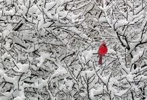 birds / by Janet Ryan