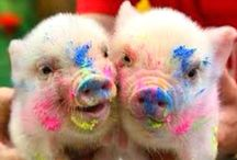 Baby teacup pigs played with paint