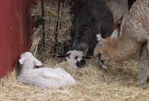 Stonewall Farm Residents / Come Meet Our Four and Two-Legged Residents!
