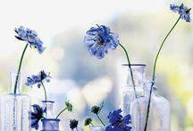 BLUE / by Lucia Olazabal