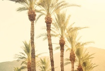 Come visit the desert {Palm Springs & Beyond}