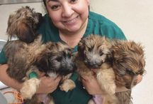 Puppies / Some of our upcoming, youngest Barking recruits available for adoption through The Barking Lot