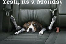Just to make you smile! / Photos, quotes, and stories with one sole purpose - to make you smile! :-)