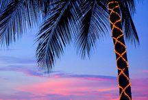 Ahhh!  Palm Trees.