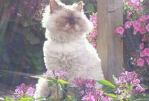 ours selkirk rex cat; myttens