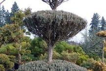 Ogród- topiary, niwaki, bonsai