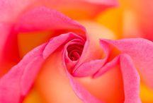 Viágok / A virágokról és szépségükről.