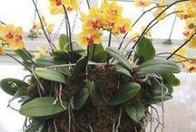 secretos para cultivar orquídeas...