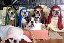Christmas pets nativity
