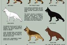 Dogs I like