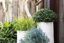 Modern Garden ideas for Casablanca