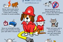 Safety Tips for Pets / Keep your pets safe and sound with these tips adn advice.