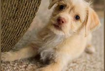 Cute / cute, things that are cute, puppies, animals, kittens, / by Habitual Homebody