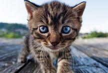 gatos re tiernos
