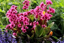 Summer Containers and Gardens / Embrace the summer sun and highlight your home with bright, seasonal colors! Whether you're doing container planting or caring for your summer garden, Hinsdale Nurseries has tips, ideas and beautiful photos to spark your inspiration.