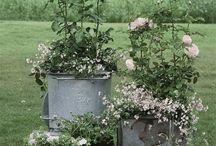 garden-záhrada