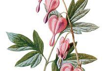 Imagens - Flores 1 / Pintura, ilustração e arte decorativa