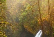 Boschi, Selve e Foreste Pluviali