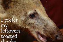 Cute animals with captions / #babyllamas #machupicchu #cuteanimals www.gypsyat60.com
