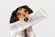 Daily Dog News Highlights