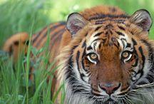 Tygří svět / Sebepoznání a seberozvoj.