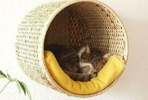 • cat room ideas •