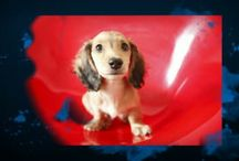 My Dachshund Books /  Three picture books about dachshunds written by me.