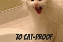 Cat Hacks