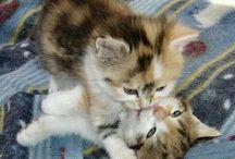 Cutest Animal Hugs / by Maya