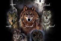 Ten kdo je správny vlk , drží spolu !!!