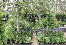 Richards Sloping Garden Ideas