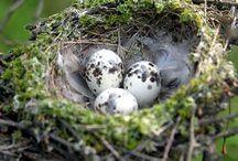huevos de pajaros