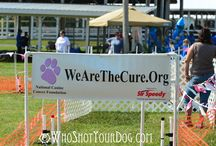 Lure for a Cure - National Canine Cancer Foundation / The National Canine Cancer Foundation's Lure for a Cure High Performance Lure Course offers lure racing fun as your best friend chase a tail around an enclosed course complete with obstacles and a timer. Dogs can run for fun or compete for their very own ribbon. No rehearsals. No training. Just excitement, fun, and pure running instinct that drives the dog to chase the tail.