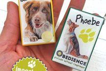 Dog Clicker - Clicker Cane / Neutral clicker? No thanks! | Un clicker anonimo? No grazie!