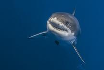 sharklove <3
