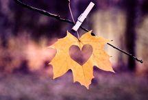 Sonbaharı seviyoruz... (We love autumn...)