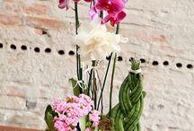 Orquídeas e flores / Orquídeas e flores
