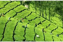 Munnar Tourist Places / We offer best Kerala honeymoon tour packages to Munnar tourist places, which is a beautiful hill station in south India