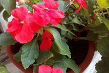Virágözön