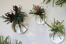 hanging plants in glass bowls