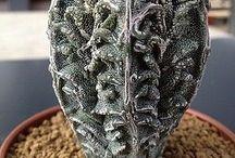 Cudne kaktusy