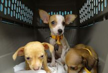 #Adopta - Ayuda o adopta a un Perro / Notas sobre adopción, ayuda a albergues animales e historias hermosas.