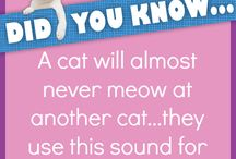 Did you know... / Here are some interesting facts about cats, dogs, and horses. Enjoy!