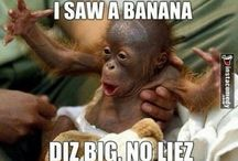 Funny picthers