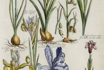~ Vintage botanical prints ~ / Biology boards with plants and animals.