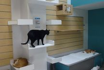 Pet products and ideas for the home / Ideas for pet home products, DIY and pet-proofing your home to make it better for pets.