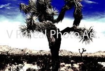 VRHeal.Photo.Art / A collection of my own photos that I describe as PhotoArt. These are photos that inspire me.