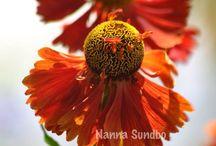 Photographer Nanna Sundbo / My photos