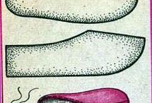 mamusz, papucs