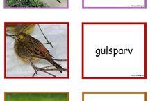Tema fåglar